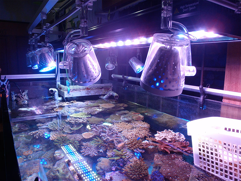 Aquarium Setups
